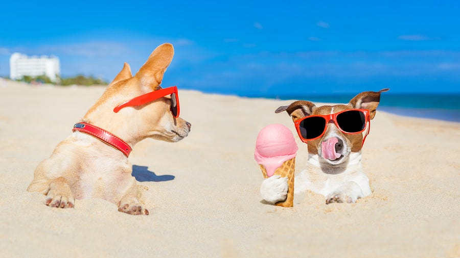 Hot Nutrition Tips for the Dog Days of Summer